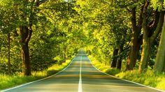 Pemandangan Jalan dan Pohon Hijau