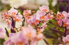 Orchidee in Festa da Fasoli Piante Novara. FotoValentina Beia. 2014