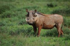 Random by Christoff P. Vosloo, via Behance Behance, Random, Pictures, Animals, Photos, Animales, Animaux, Animal, Animais