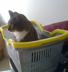 Sally in a laundry basket