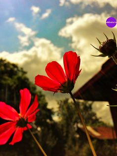 Flowers Photography Google Sites, Cool Photos, Flowers, Plants, Photography, Facebook, Twitter, Instagram, Photograph