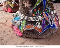 indian elephants | Tumblr