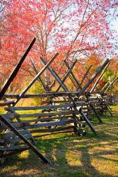 Southern Spring-Red Maples and Split Rail Fence, SC