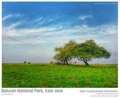 Africa van Java