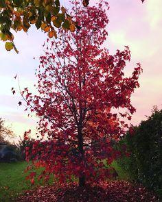 Colori #autunno