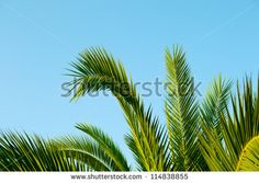 palm leaves which extends up to the sky