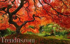 Sonbaharın güzel renkleri
