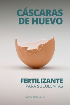 Egg shells as fertilizer or homemade fertilizer for succulents,You can find Shells and more on our website.Egg shells as fertilizer or homemade fertilizer for succulents, Plastic Pumpkins, Egg Shells, Succulents Garden, Planting Flowers, Indoor Garden, Plant Hanger, Gardening Tips, Flower Pots, Decorative Bowls