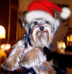 Mi linda de navidad