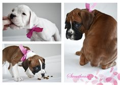 I just want to share with you a part of my life: boxer puppies! I love puppies and I love to take a pictures of them :)