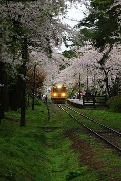 Train in Cherry Blossoms, Ashino-Koen Station, Aomori, Japan Aomori, Beautiful World, Beautiful Places, Trains, S Bahn, Famous Castles, Train Tracks, Locomotive, Japan Travel