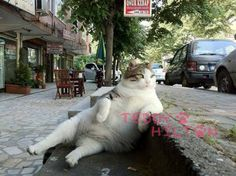 Oh man, this cat chills so hard. He just chills sooo hard! LOLz!  Seriously, this is one of the best pics (above) we´ve seen in a while.  This randomly just showed up on the Internet. ...