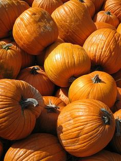 Why is Pumpkin So Good for You ~ Pumpkins are one of the most overlooked foods in terms of health benefits and nutrients. It seems many people's only exposure to this extremely healthy food is sugar laden pumpkin pie at Thanksgiving or Christmas.