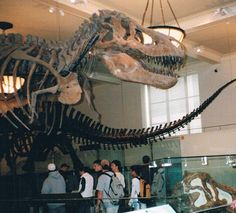 Remembering the visit to the American Museum of Natural History and seeing a T. rex exhibit.
