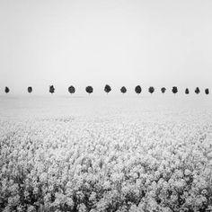 Gerald Berghammer, Ina Forstinger - Brassica Napus Study France - Black and White Fine Art Landscapes Photography Landscape Photography, Fine Art Photography, Panorama Camera, Minimalist Landscape, Fine Art Paper, Black And White Photography, Fine Art Prints, Study, Exhibitions