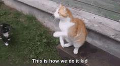Kitties bein' kitties