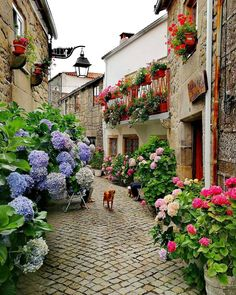 Challenge yourself with this Trancoso, Portugal jigsaw puzzle for free. 219 others took a break from the world and solved it. Beautiful Places To Travel, Beautiful World, Beautiful Gardens, Beautiful Flowers, Beautiful Pictures, Belle Villa, Beautiful Streets, Container Gardening, Gardening Tools