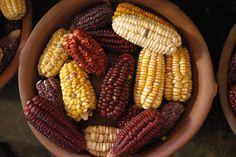La riqueza alimenticia de la Quebrada de Humahuaca - Fondo de Olla
