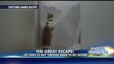 Funny video shows cat digging through snow that blocks the door.