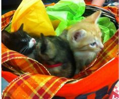 3 little kittens who lost their mittens! #kittens