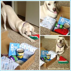 BarkBox makes a great gift for dogs on National Dog Day or any day! <3