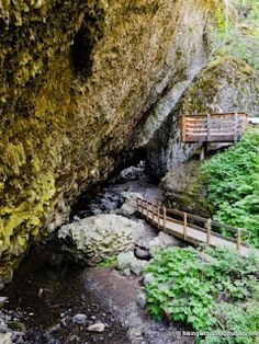 Hike: Boulder Cave Trail #962 (easy and fun one for the kids! loved this place growing up!)