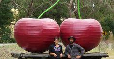 big cherries fleurieu cherries  South Australia  aussie big things