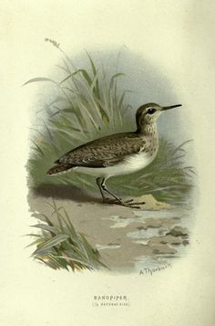 https://www.flickr.com/photos/biodivlibrary/sets/72157632192519408/