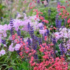 Cosmic colours with phlox salvias and heucheras Garden Shrubs, Garden Plants, Heuchera, Family Garden, Garden Borders, Colorful Garden, Small Trees, Dream Garden, Garden Inspiration