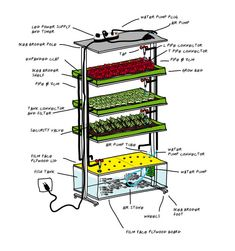 DIY Kitchen Aquaponic System Grows a Meal a Day The tank in this aquaponic setup holds about 400 liters (105 gallons) and will support fish like tilapia, salmon, or carp.  It holds three grow beds above the tank where vegetables can be planted.  At the top of the grow beds is a LED light hood.  This design was created to optimize space and costs with indoor food production.