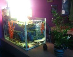 Aqua Turtle tank