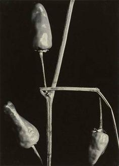 View Untitled Paprika by Aenne Biermann on artnet. Browse upcoming and past auction lots by Aenne Biermann. New Objectivity, Digital Museum, Gelatin Silver Print, Collaborative Art, Monochrom, Global Art, Art Market, Female Art, Artwork