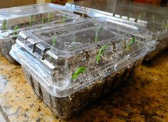 Plastic Containers | How To Germinate Seeds A Homesteader's Guide To Sprouting Seeds