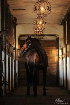 The lodge's stables - love the horse shoe lights
