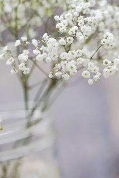 Untitled Babys Breath Flowers, Romantic Flowers, Botanical Drawings, Baby's Breath, Carpe Diem, Deep Thoughts, Scenery, Bloom, Cake