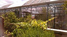 Butterfly Habitat #SpringsPreserve