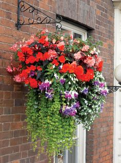 Strong red and purple flowers make a hanging basket that really pops