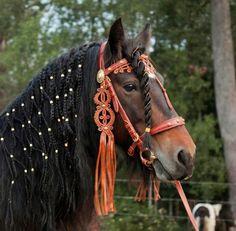 Fonottsörényü ló, Bábolna.