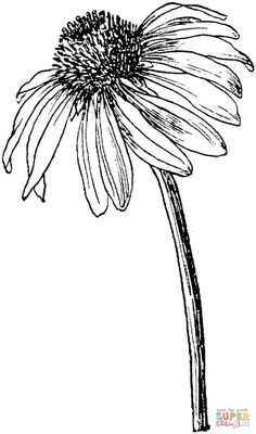 Image result for pen and ink drawings simple flowers, free