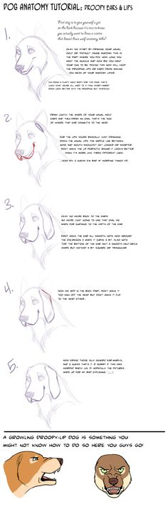 Dog+Tut:+Droopy+lips+and+ears+by+AddictionHalfWay.deviantart.com+on+@deviantART