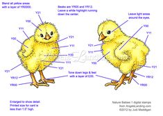 Copic Coloring Guide: Chicks from Nature Babies 1 by Crafts - Cards and Paper Crafts at Splitcoaststampers