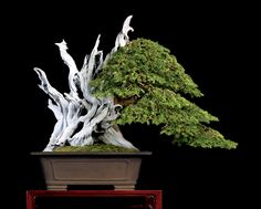 Carving Deadwood – How About Yew? 7/20/15