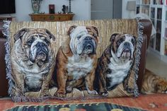 Wood Background theme with 3 bulldogs that were cropped from 3 different images and woven as one piece..