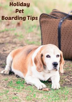 Holiday Pet Boarding Tips - Miss Molly Says