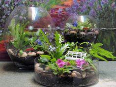 Cómo hacer un terrario y cuidados esenciales   Cuidar de tus plantas es facilisimo.com