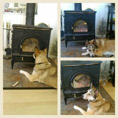 Likes the warmth