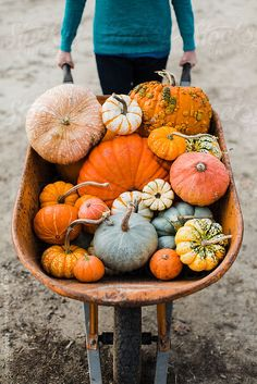 Variety- it shows many different types of pumpkins. You can see how different each of them are, none of them look the exact same Pumpkin Farm, Canned Pumpkin, Glass Pumpkins, Fall Pumpkins, Fall Pictures, Fall Photos, Autumn Day, Autumn Home, Autumn Harvest