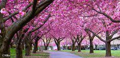 arboles hermosos con flores - Google Search