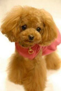 Teddy Bear cut she is real