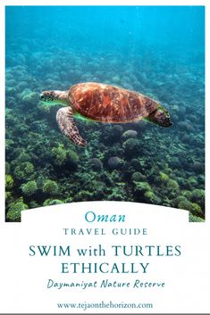 How to Swim with Turtles Ethically in Daymaniyat Islands Nature Reserve Go Volunteer, Oman Tourism, Slow Travel, Family Travel, Marine Reserves, Oman Travel, Nature Reserve, Marine Life, Places To Travel